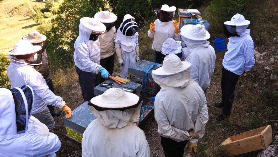 De plus en plus d'amateurs attirés par l'apiculture à Entraygues.