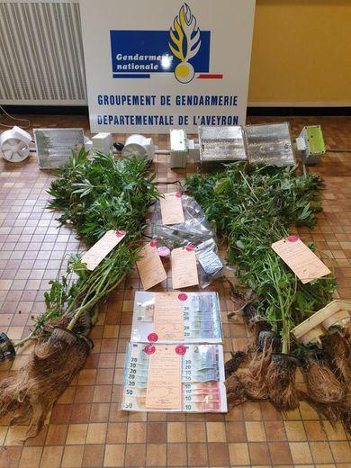 Les gendarmes ont saisi 14 pieds de cannabis et une importante somme d'argent.