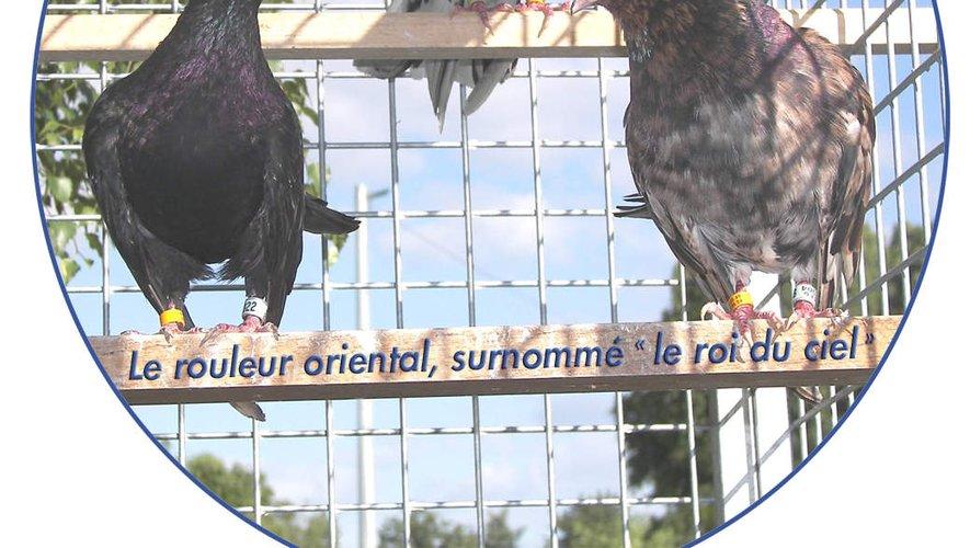 Avec tous ces reports, ne pensez pas que l'association prenne le public pour des… pigeons !