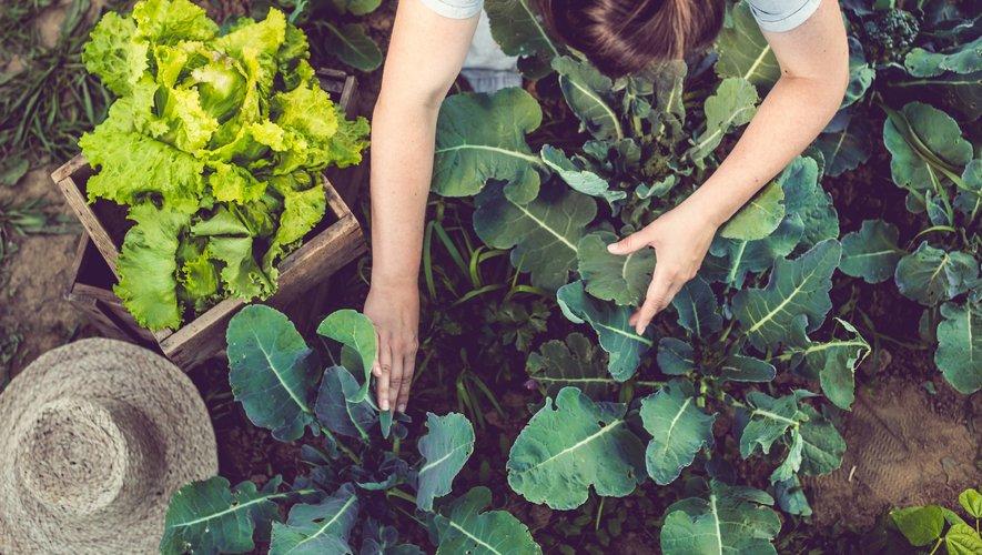 """Planter des arbres et s'en occuper régulièrement, aller au bureau à vélo pendant une semaine, soutenir un projet en faveur du climat (don financier, bénévolat). Voici quelques exemples de défis proposés par le jeu """"Ma Petite Planète""""."""