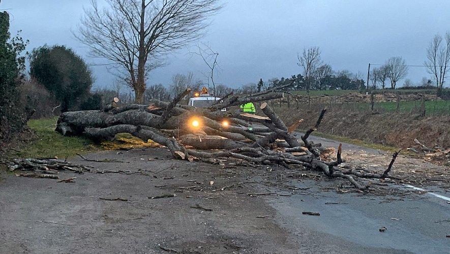 Quelques arbres sont tombés sur la chaussée, nécessitant l'intervention des services de voiries.