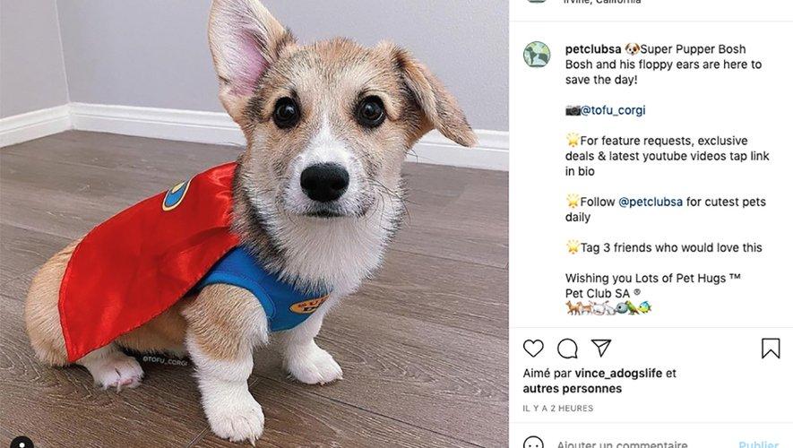 Instagram regorge de millions de photos de chiens et chats, plus stupéfiantes les unes que les autres.