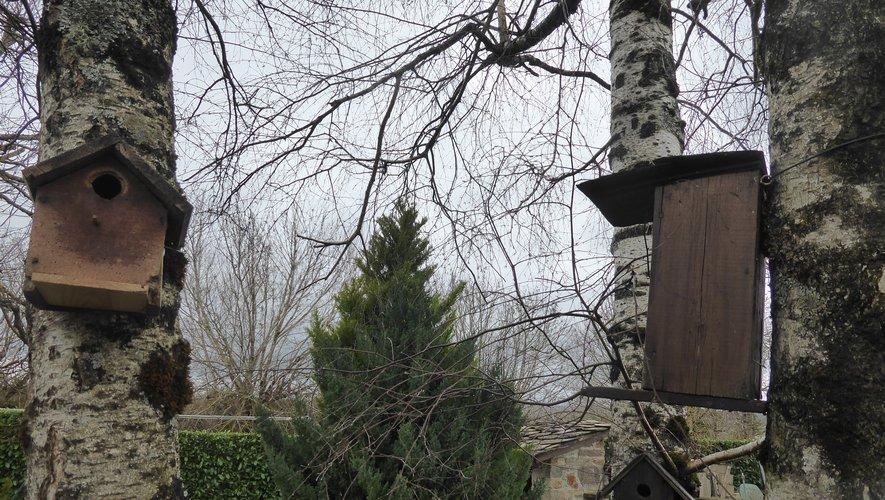 Des nichoirs installés dans un jardin primaubois.