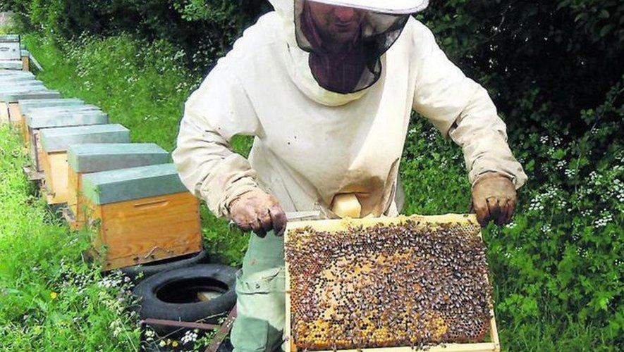 Les abeilles tout comme les apiculteurs sont les sentinelles de la nature.Les abeilles se font tour à tour nettoyeuses, nourrices, collecteuses, bâtisseuses, gardiennes et butineuses.