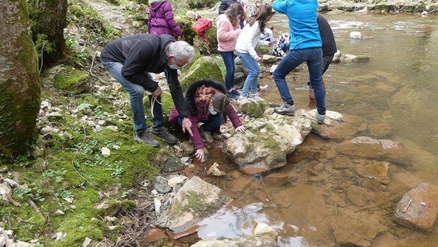 Les truitelles découvrent les eaux du Dourdou.
