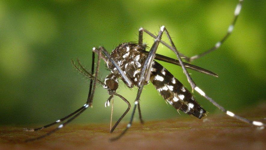 Aveyron : pas de confinement pour le moustique tigre - Centre Presse Aveyron