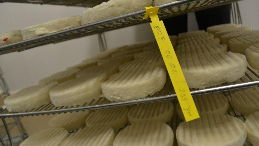 Si tout va bien, le fromage pourrait obtenir son IGP dansle courant de l'année 2020.