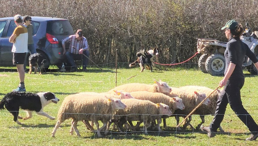 Ces formations sont créées pour faciliter le travail des éleveurs.