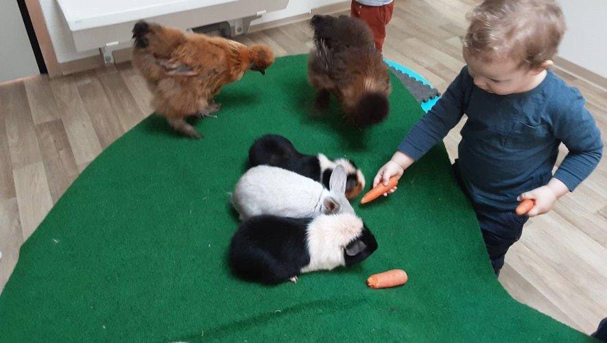 Un enfant profitant des cohons-dinde et des poules.