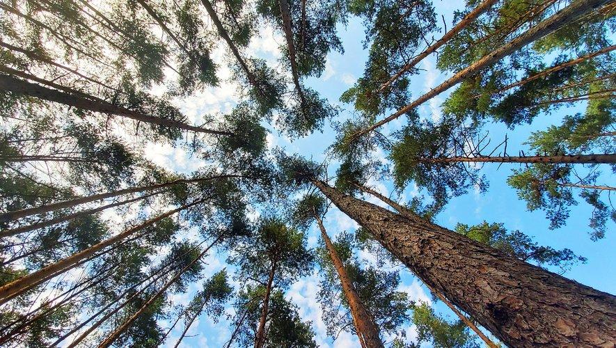 Non seulement le bruit nuit aux arbres et à la diversité des plantes, mais son impact négatif peut durer bien après le retour du silence.