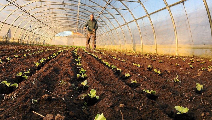 La filière du maraîchage bio est très présente en Aveyron. Près de 90 % des installations dans cette filière se font en agriculture biologique.