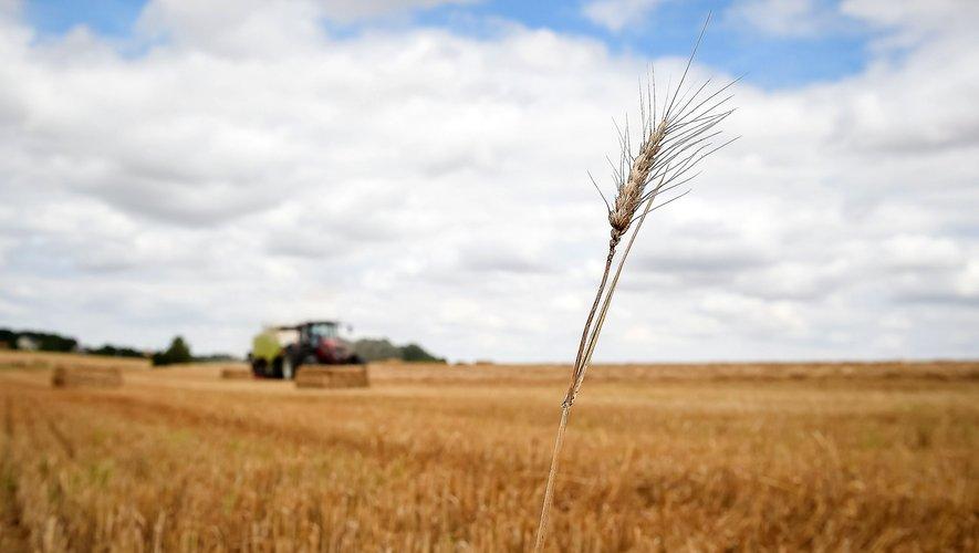 """""""Le blé hybride offre aux agriculteurs la possibilité de relever les défis du changementclimatique"""", explique Bob Reiter (Bayer)."""