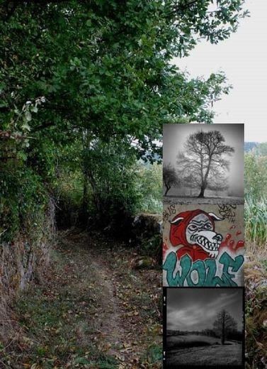 """""""Douze"""" une expo mêlant nature et photographies, du 1er au 10 mai."""