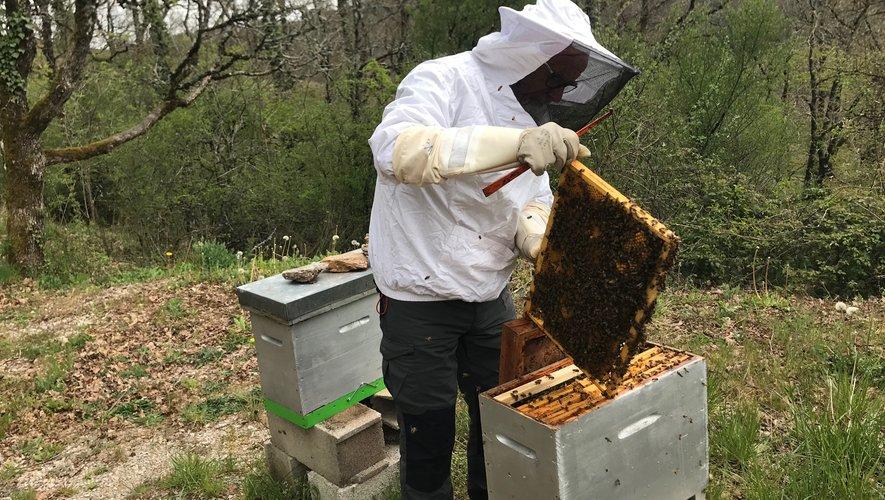 Alain Teissier contrôle une ruche à Toizac.