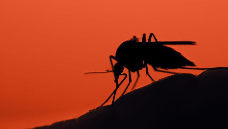 Le paludisme, l'autre épidémie