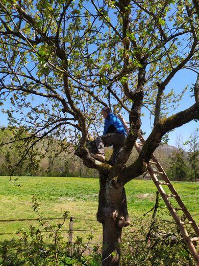 """Situation concrète, lors de la formation """"taille des arbres fruitiers""""."""