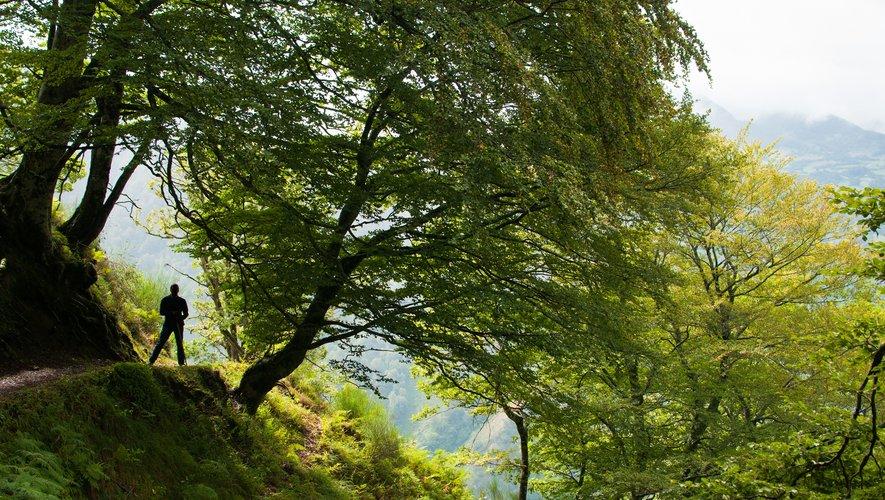 Pour 89% des Français, les forêts font partie de notre patrimoine, au même titre que la gastronomie et les monuments.