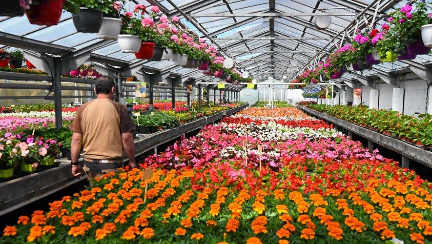 Le choix de plantes est grand dans les serres de Bel-Air.