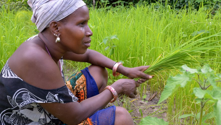 Au Sénégal, les acteurs travaillent pour obtenir un modèle d'entreprise sociale et militent pour des statuts juridiques de l'Economie Sociale et Solidaire.