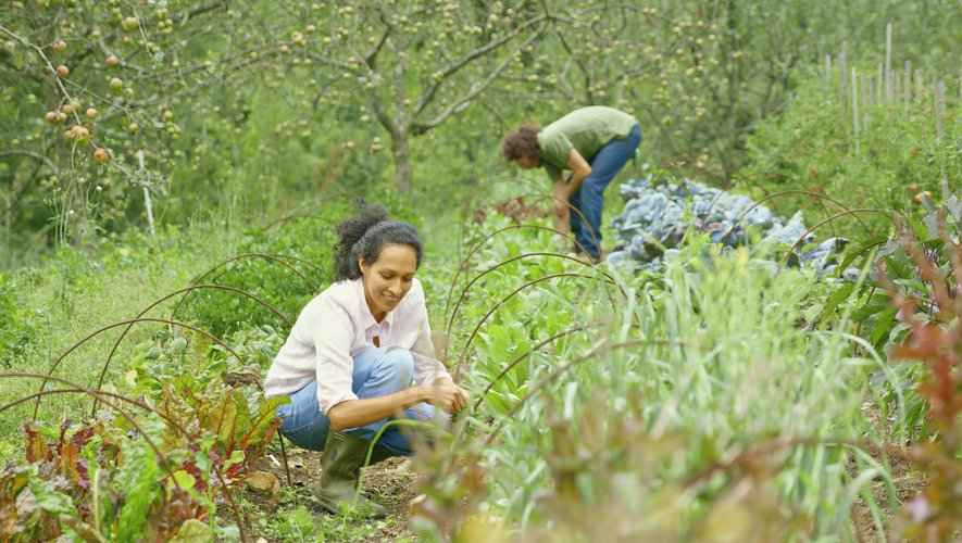On profite du long week-end pour lancer son potager de permaculture