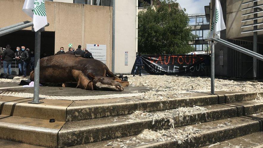 Le cadavre de la jument tuée par des vautours a été déposé devant les grilles de la DDCSPP, ce lundi 17 mai, à Rodez.