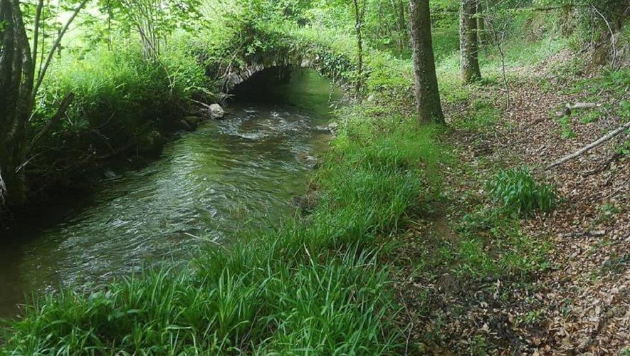 Un trail à travers les bois ségalis.