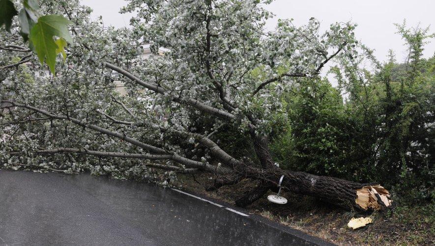 De nombreux arbres arrachés dans les Cévennes gardoises.