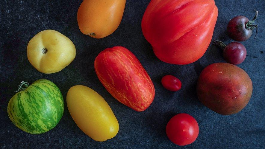 Les Français consomment 850.000 tonnes de tomates chaque année, soit une moyenne de 14 kg par ménage. Il serait dommage de ne pas varier les plaisirs