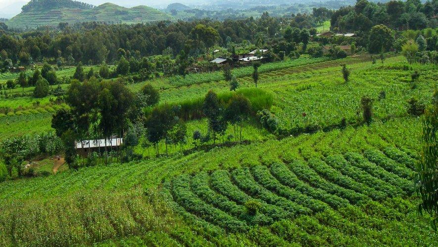 L'agroforesterie met l'arbre au centre des cultures et incite à recréer des emplois sur les exploitations.