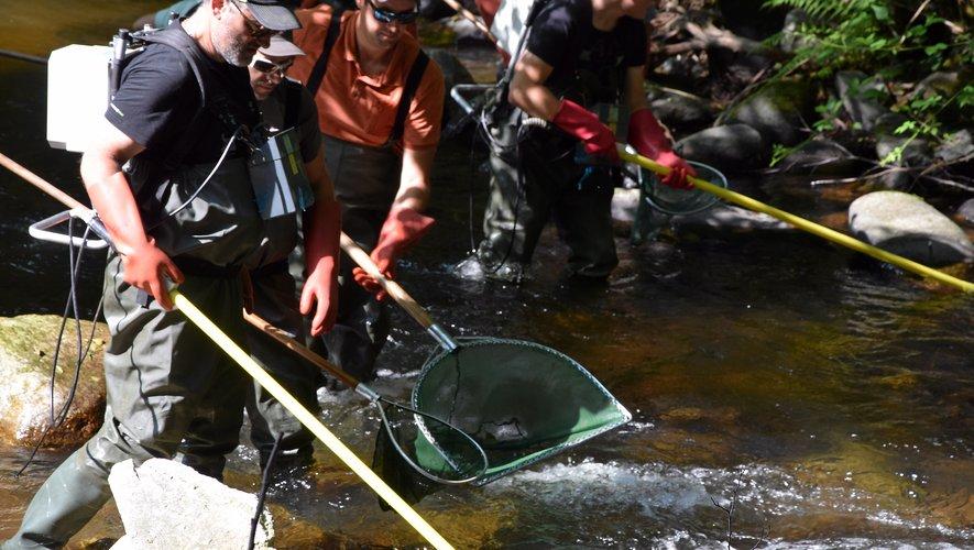 Une pêche non létale qui a permis de réaliser un inventaire rassurant des espèces aquatiques à Campouriez.