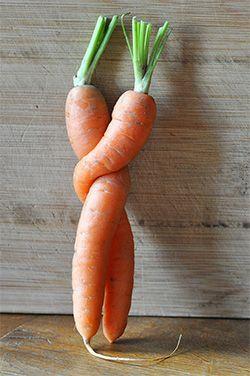 Christine et Guillaume Viala comme des carottes enlacées pour partager avec goût les mets et les mots.