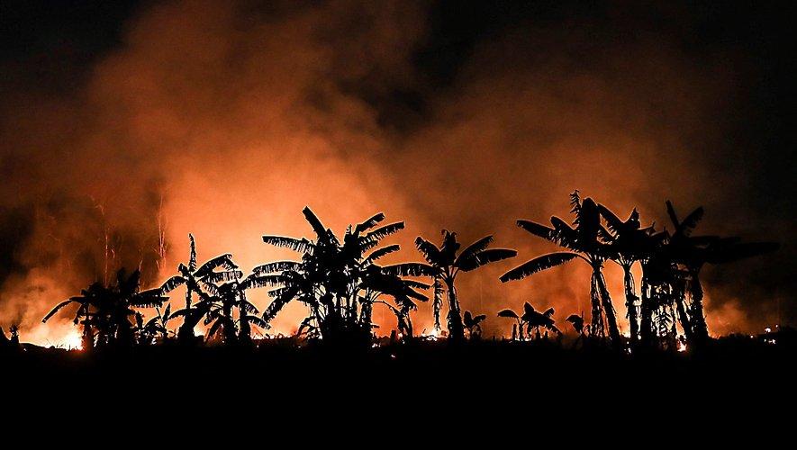 Touchée par les incendies volontaires, pour gagner des terres cultivables, la forêt est en danger.