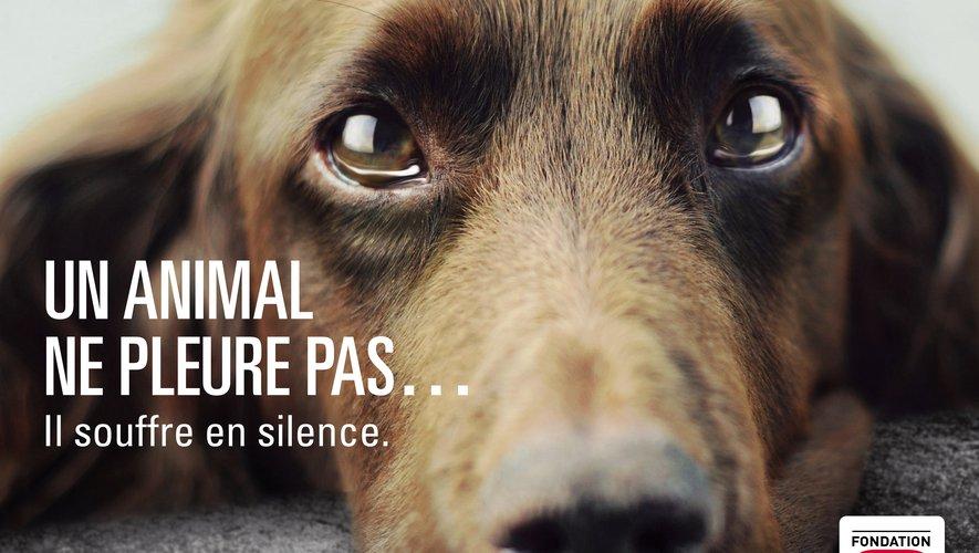 Photo de campagne nationale contre l'abandon des animaux de compagnie.