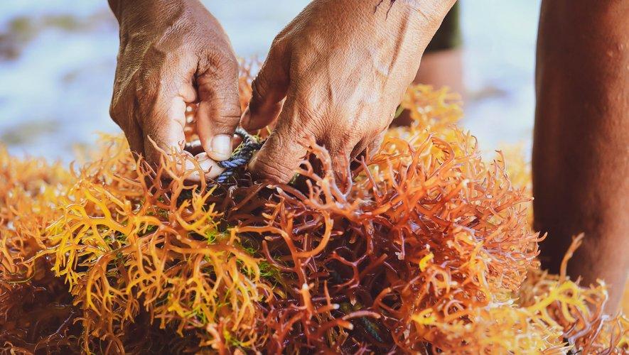 """En pleine expansion, les produits alimentaires """"aquatiques"""" pourraient constituer un rempart pour réduire l'empreinte carbone et lutter contre le fléau de la malnutrition."""