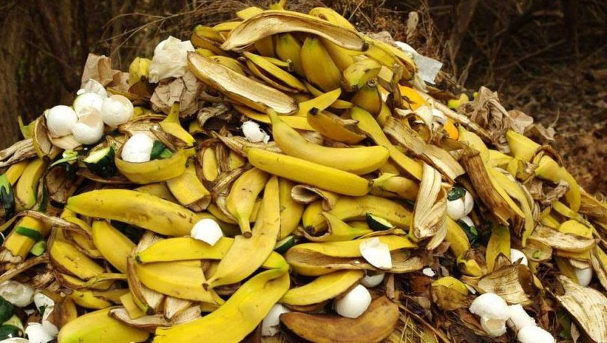 Plutôt que de les jeter, il existe de nombreuses façons de réutiliser les peaux de banane.